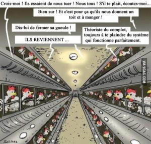 theorie_du_complot_au_poulailler